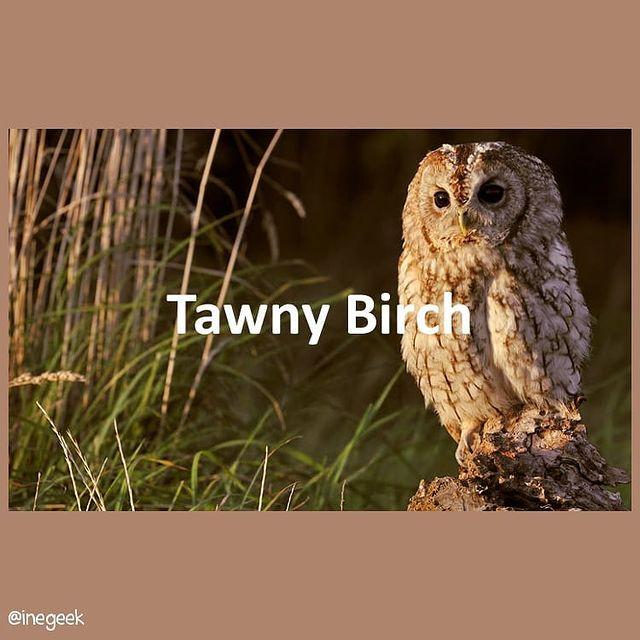 #pantone2020winterchallenge - Tawny Birch